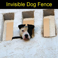 invisible_dog_fence